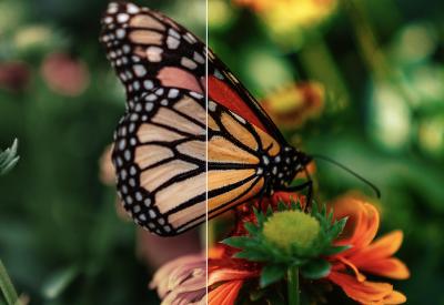 Butterfly_unsplash2